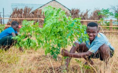 Baumpflanz-Projekt in Afrika